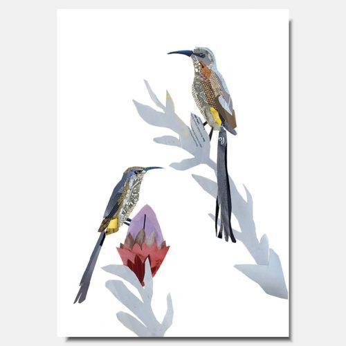 Cape Sugar Bird Collage Prints by artist Zoe Mafham
